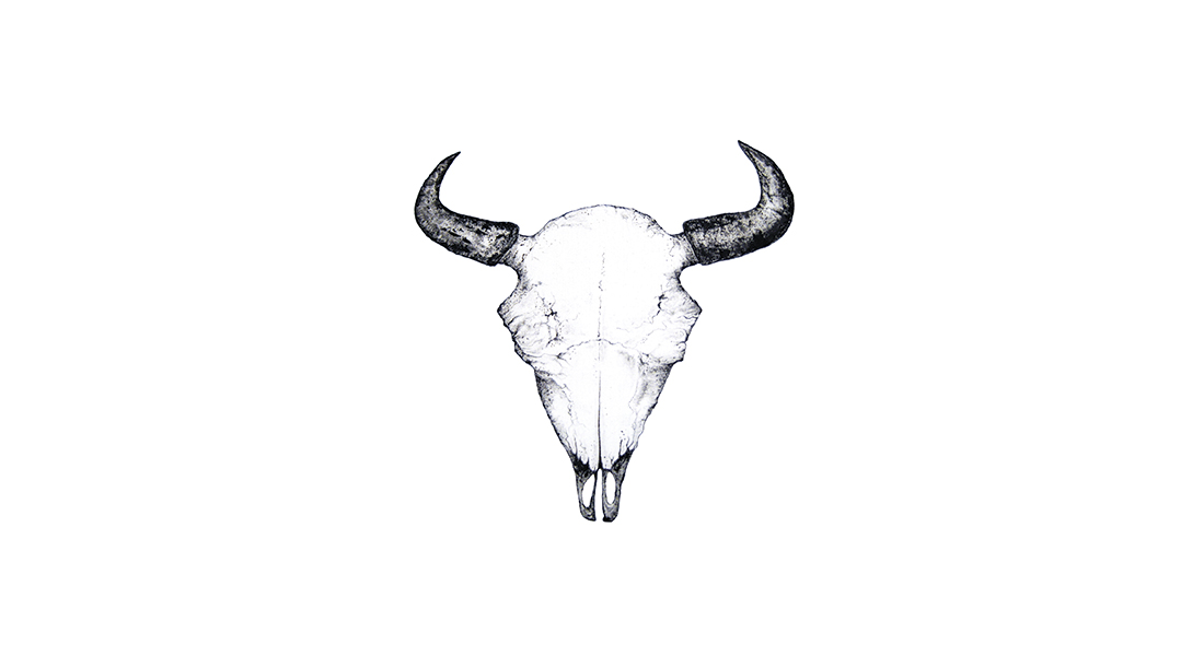 IWA9 Bison Skull Illustration