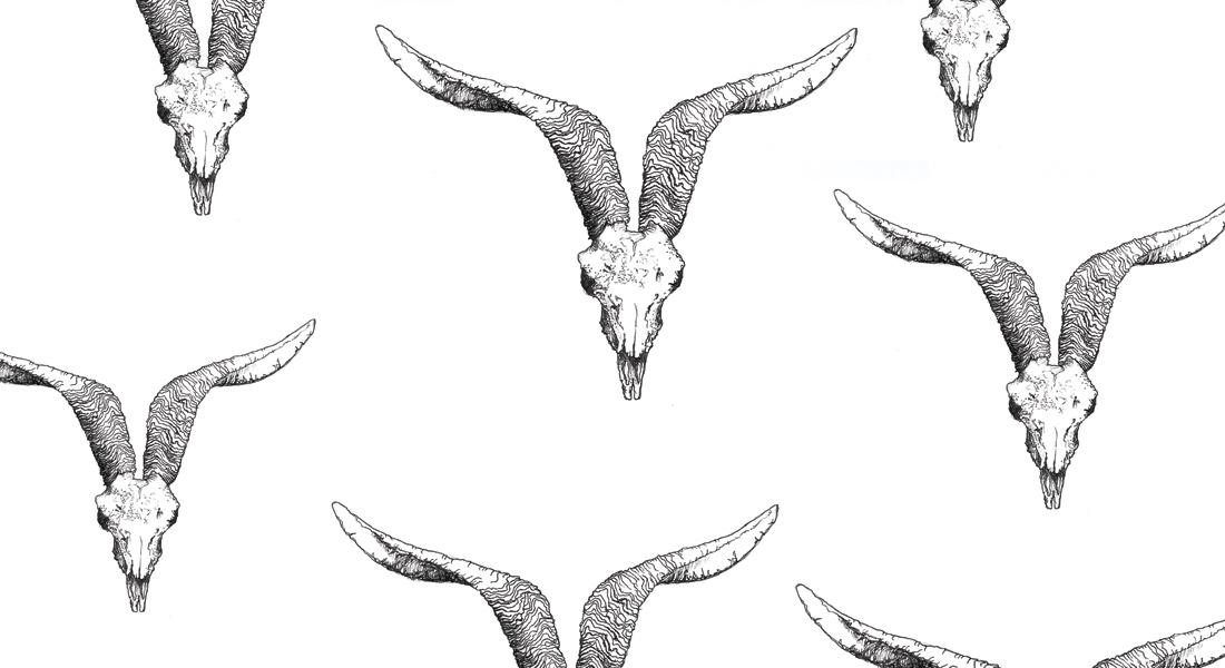 IWA9 Goat Skull Illustration